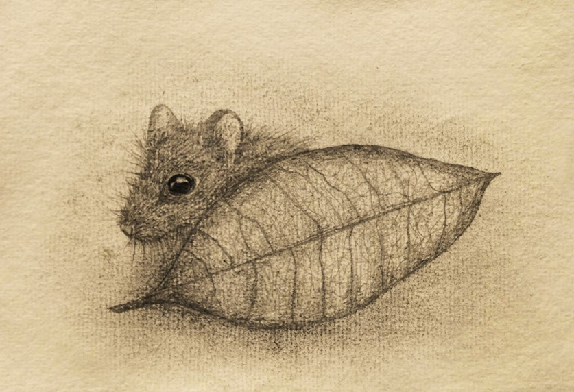Shy Mouse by Deborah Sheehy