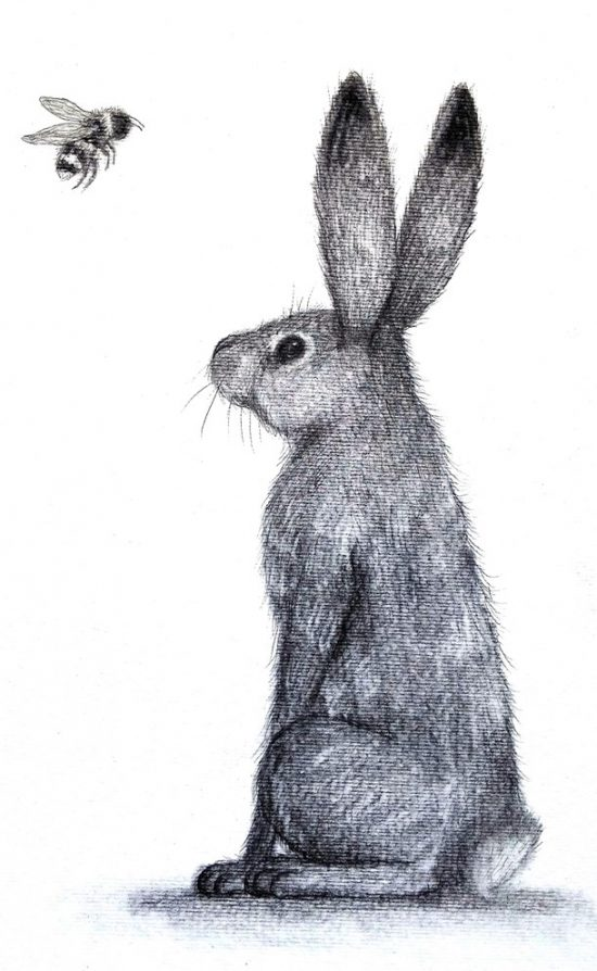 Hare and the Bee by Deborah Sheehy